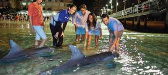 Tangalooma Dolphin Feeding Adventure Tour from Brisbane Thumbnail 3
