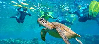 Byron Bay Snorkelling Tours Thumbnail 1