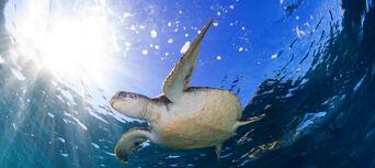 Byron Bay Snorkelling Tours Thumbnail 3