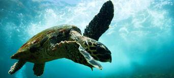 Byron Bay Snorkelling Tours Thumbnail 4