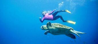 Byron Bay Snorkelling Tours Thumbnail 2