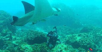Scuba Diver 2 Day Course in Byron Bay Thumbnail 2