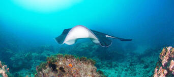 Scuba Dive Refresher Courses in Byron Bay Thumbnail 2