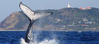 2.5 Hour Whale Watching Byron Bay Tour Thumbnail 1