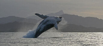 2.5 Hour Whale Watching Byron Bay Tour Thumbnail 6