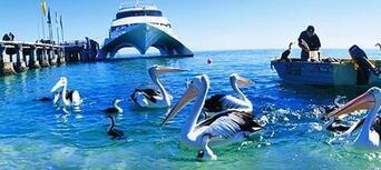 Brisbane to Tangalooma Island Resort Day Tour Thumbnail 2