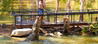Hartley's Crocodile Adventures Half Day Tour from Cairns Thumbnail 5