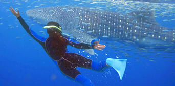Swim with Whale Sharks Thumbnail 2