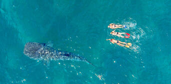 Swim with Whale Sharks Thumbnail 5