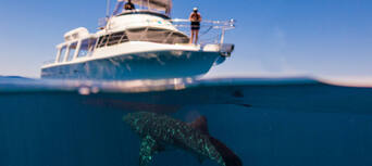 Swim with Whale Sharks Thumbnail 1