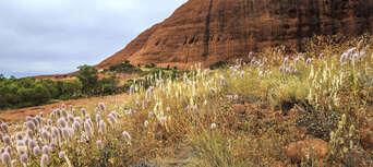 Uluru and Kata Tjuta Tour with BBQ Dinner Thumbnail 4