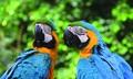 Birdworld Kuranda Tickets Thumbnail 1