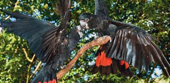Kuranda Koala Gardens and Birdworld 2 Attraction Pass Thumbnail 4