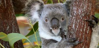 Kuranda Koala Gardens and Birdworld 2 Attraction Pass Thumbnail 5