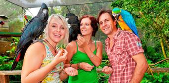 Kuranda Koala Gardens and Birdworld 2 Attraction Pass Thumbnail 3