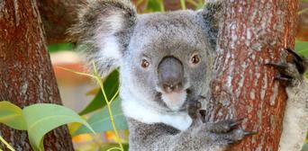 Kuranda Koala Gardens and Birdworld 2 Attraction Pass Thumbnail 2