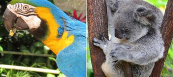 Kuranda Koala Gardens and Birdworld 2 Attraction Pass Thumbnail 1