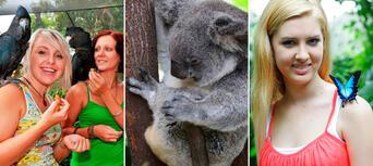 Kuranda Koala Gardens, Birdworld and Butterfly Sanctuary 3 Attraction Pass Thumbnail 1