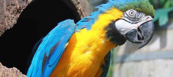 Kuranda Koala Gardens, Birdworld and Butterfly Sanctuary 3 Attraction Pass Thumbnail 3