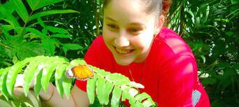Kuranda Koala Gardens, Birdworld and Butterfly Sanctuary 3 Attraction Pass Thumbnail 4