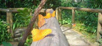 Kuranda Koala Gardens, Birdworld and Butterfly Sanctuary 3 Attraction Pass Thumbnail 5