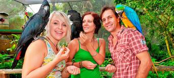 Kuranda Koala Gardens, Birdworld and Butterfly Sanctuary 3 Attraction Pass Thumbnail 2