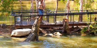Hartleys Crocodile Adventures Entry Tickets Thumbnail 1