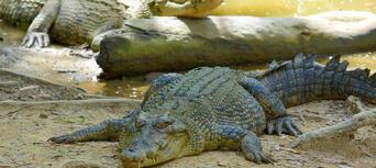 Hartleys Crocodile Adventures Entry Tickets Thumbnail 2