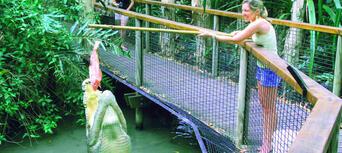 Hartleys Crocodile Adventures Croc Feed Experience Thumbnail 2