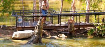 Hartleys Crocodile Adventures Croc Feed Experience Thumbnail 3