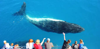 Sydney Whale Watching Cruise with BBQ Lunch Thumbnail 5