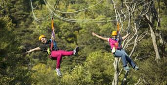 Waiheke Island Ecozip Adventures Zip Line Tour Thumbnail 1
