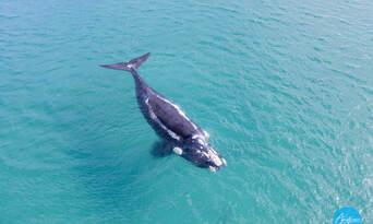 Morning Whale Watching Cruise Augusta Thumbnail 2