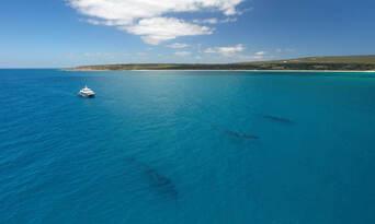 Morning Whale Watching Cruise Augusta Thumbnail 3