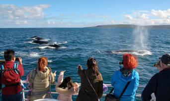 Morning Whale Watching Cruise Augusta Thumbnail 4
