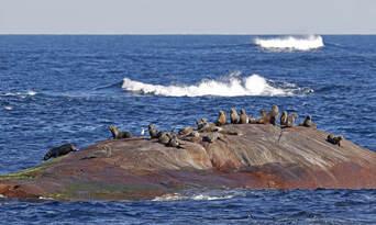 Morning Whale Watching Cruise Augusta Thumbnail 5