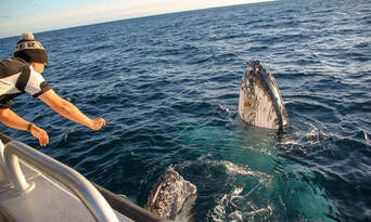 Afternoon Whale Watching Cruise Augusta Thumbnail 3