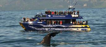 Whale Watching Cruise Kaikoura Thumbnail 1