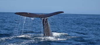 Whale Watching Cruise Kaikoura Thumbnail 4