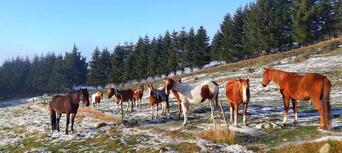 2.5 Hour Horse Riding Tour in Te Anau Thumbnail 3