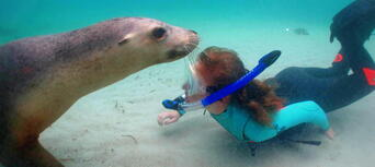 Swim with Sea Lions at Port Lincoln Thumbnail 5
