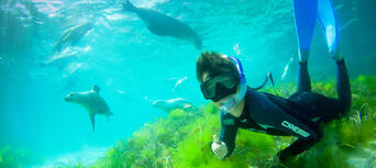 Swim with Sea Lions at Port Lincoln Thumbnail 6