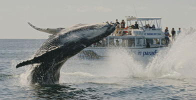 Midday Whale Watching Cruise