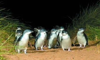 Phillip Island Nature and Wildlife Tour Thumbnail 1