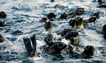 Phillip Island Nature and Wildlife Tour Thumbnail 3