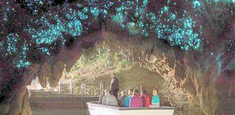 Waitomo Glowworm Express Tour return Auckland Thumbnail 5