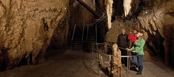 Auckland to Waitomo Caves Day Tour (return Auckland) Thumbnail 3