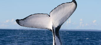 Phillip Island Winter Whale Watching Cruise Thumbnail 3