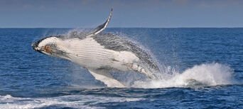 Phillip Island Winter Whale Watching Cruise Thumbnail 2