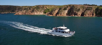 Phillip Island Winter Whale Watching Cruise Thumbnail 5
